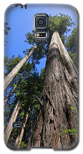 Towering Redwoods Galaxy S5 Case