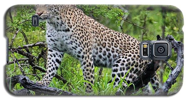 Tree Climbing Leopard Galaxy S5 Case