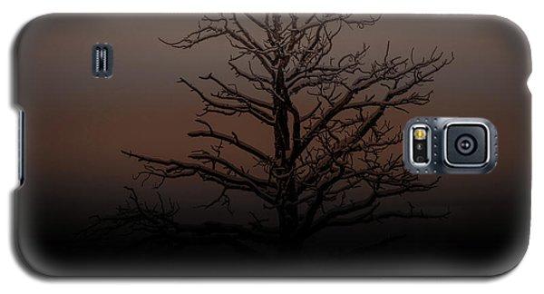 Tree Silhouette  Galaxy S5 Case
