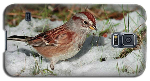 Tree Sparrow In Snow Galaxy S5 Case