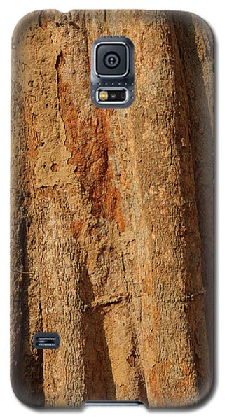 Tree Trunk And Bark Of Chambak Galaxy S5 Case