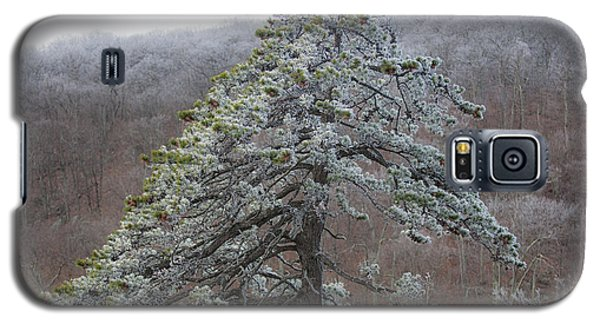 Tree With Hoarfrost Galaxy S5 Case