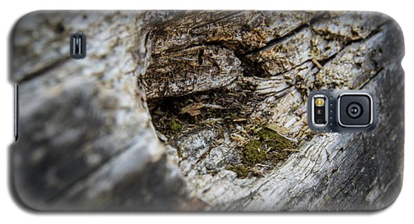 Tree Wood Galaxy S5 Case