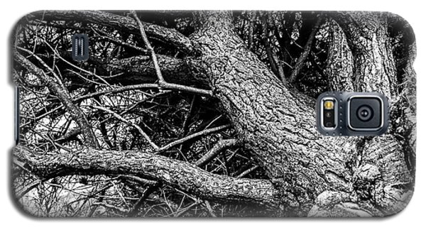 Trees, Leaning Galaxy S5 Case