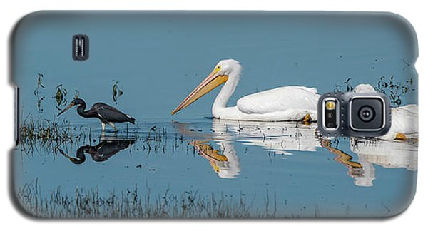 Tricolored Herons And American White Pelicans Galaxy S5 Case