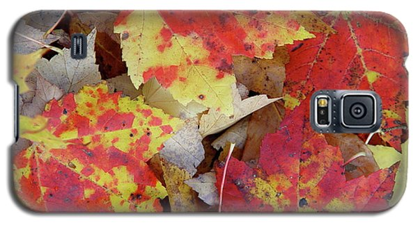 True Autumn Colors Galaxy S5 Case