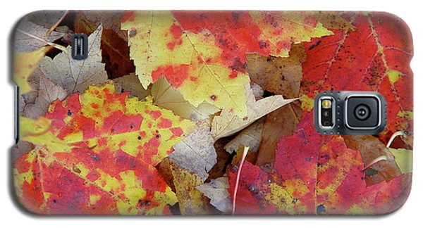 True Autumn Colors Galaxy S5 Case