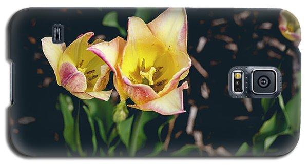 Tulips At Hershey Gardens Galaxy S5 Case