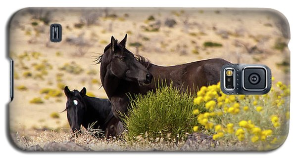 Two Wild Black Horses Among Yellow Flowers Galaxy S5 Case