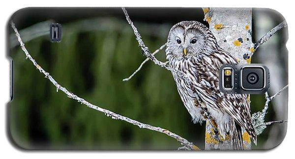Ural Owl Perching On An Aspen Twig Galaxy S5 Case