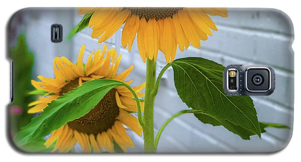 Urban Sunflower Galaxy S5 Case