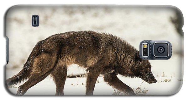 W13 Galaxy S5 Case