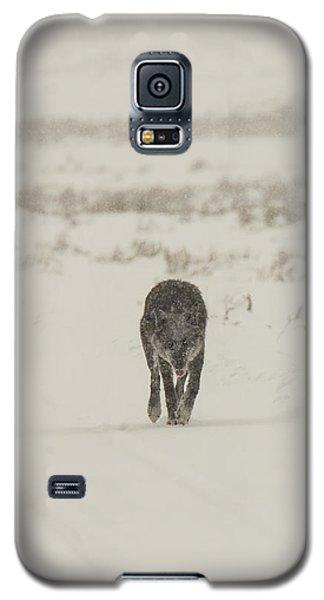 W33 Galaxy S5 Case