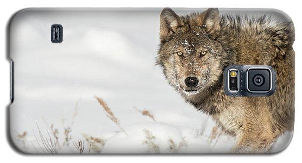 W35 Galaxy S5 Case