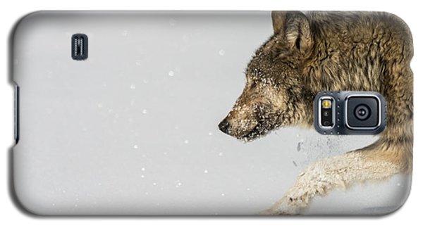 W40 Galaxy S5 Case