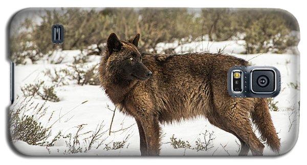 W9 Galaxy S5 Case