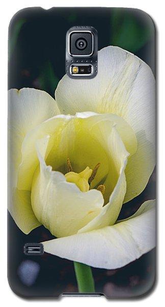 Wabi-sabi Galaxy S5 Case