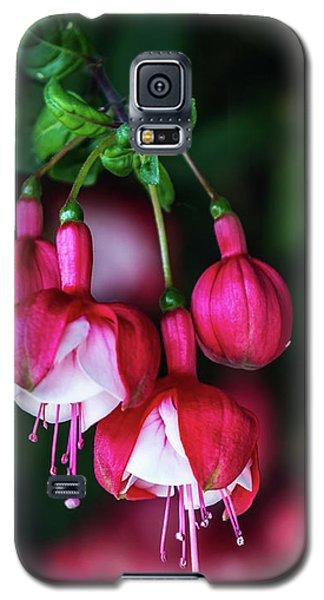 Wallpaper Flower Galaxy S5 Case
