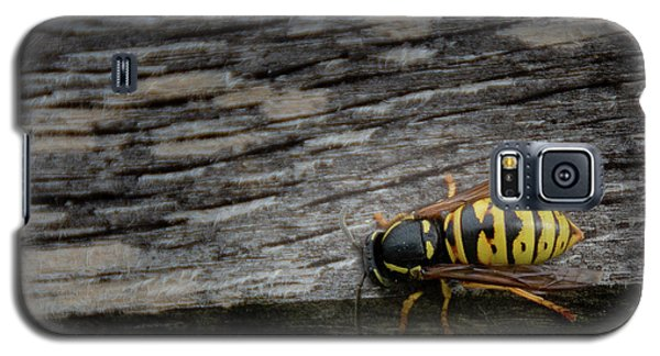 Wasp On Wood Galaxy S5 Case