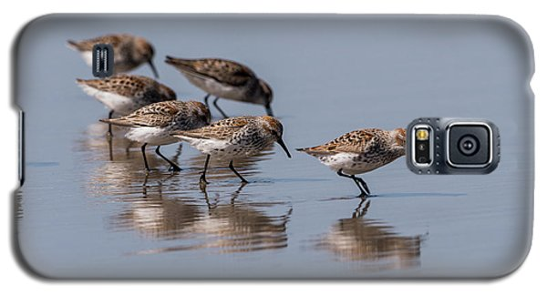 Western Sandpipers And Reflection Galaxy S5 Case