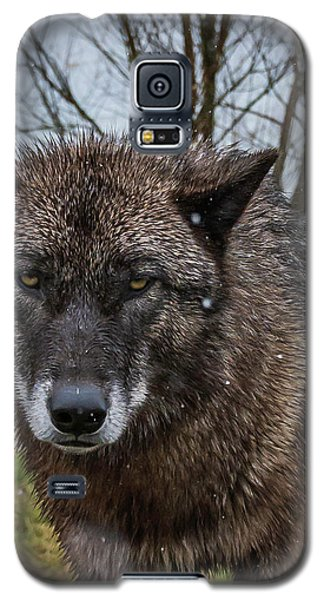 Wet Wolf Galaxy S5 Case