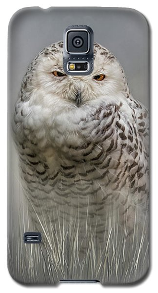 White Beauty In The Field Galaxy S5 Case
