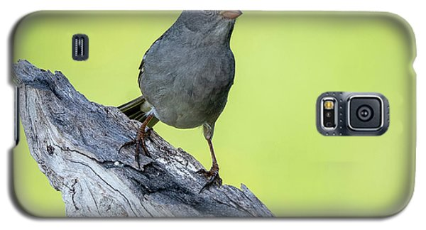 White Crowned Sparrow 1 Galaxy S5 Case