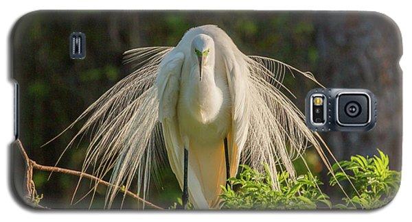 White Egret Galaxy S5 Case