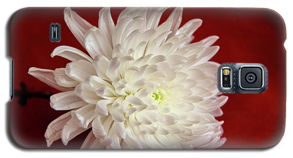White Flower On Red-1 Galaxy S5 Case