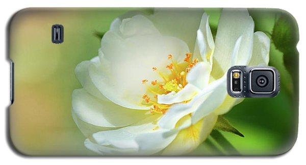 White Iceberg Rose Galaxy S5 Case
