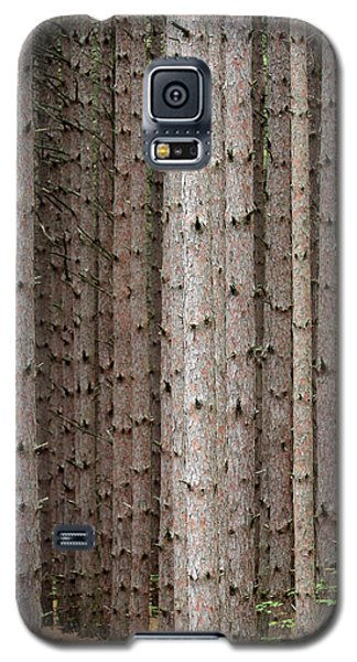 White Pines Galaxy S5 Case