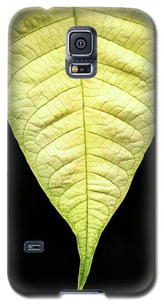 White Poinsettia Leaf Galaxy S5 Case