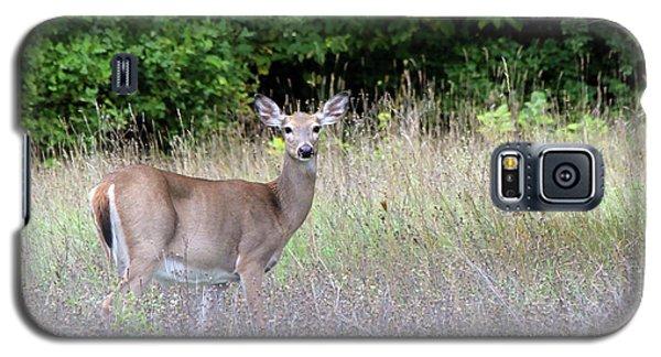 White Tale Deer Galaxy S5 Case