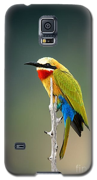 Branch Galaxy S5 Case - Whitefronted Bee-eater Merops by Johan Swanepoel
