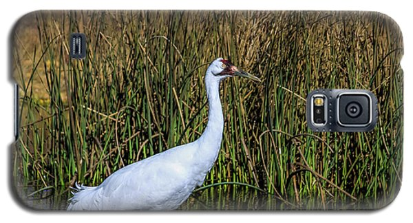 Whooping Crane In Pond Galaxy S5 Case