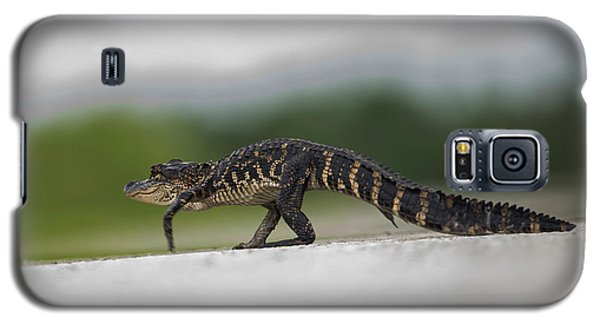 Why Did The Gator Cross The Road? Galaxy S5 Case