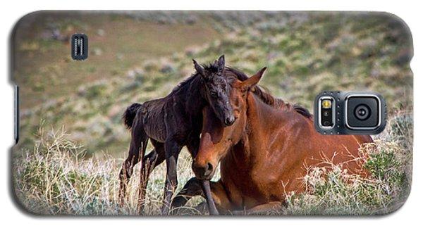 Wild Black New Born Foal And Mare Galaxy S5 Case