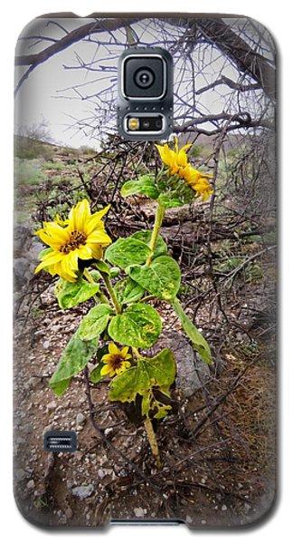 Wild Desert Sunflower Galaxy S5 Case
