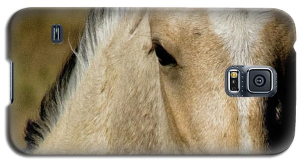 Wild Mustangs Of New Mexico 5 Galaxy S5 Case