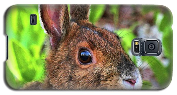 Wild Rabbit Galaxy S5 Case