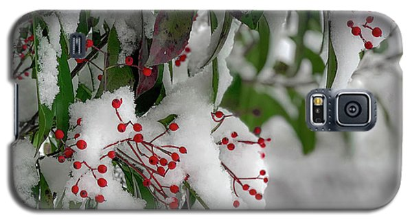 Winter Berries Galaxy S5 Case
