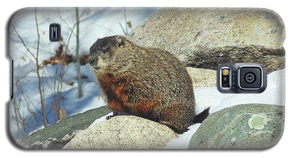 Winter Groundhog Galaxy S5 Case