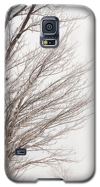 Winter Hoarfrost Galaxy S5 Case