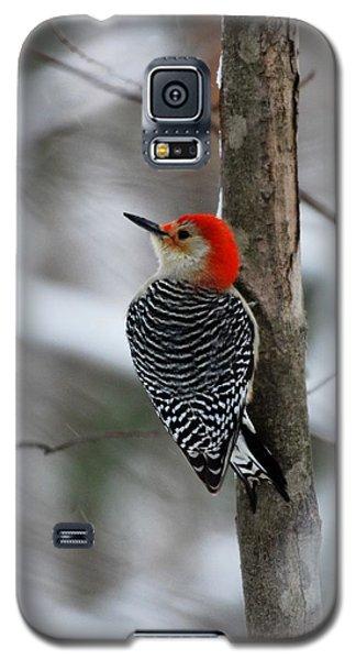 Winter Visitor Galaxy S5 Case