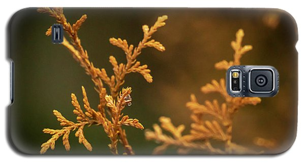 Winter's Hedges Galaxy S5 Case