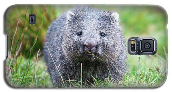 Wombat Galaxy S5 Case
