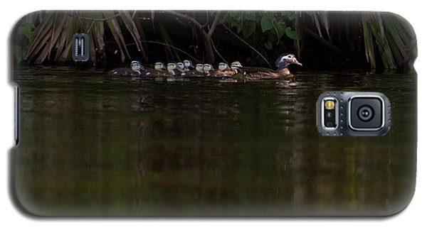 Wood Duck And Ducklings Galaxy S5 Case