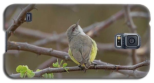 Yellow-bellied Eremomela Galaxy S5 Case