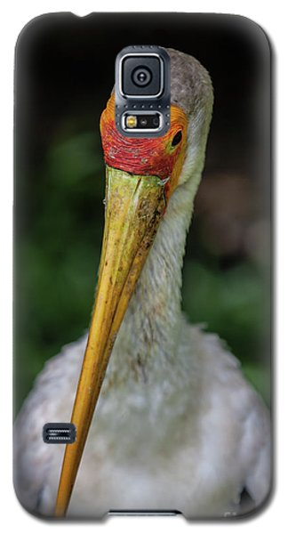 Yellow Billed Storks Galaxy S5 Case