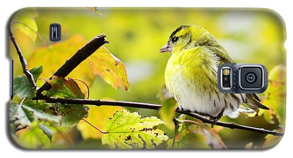 Yellow Bird Galaxy S5 Case